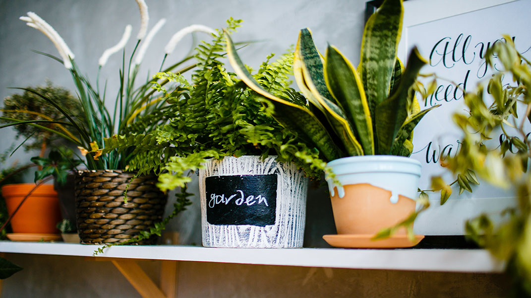 Three Winter Gardening Tips That Also Promote Healthy Living